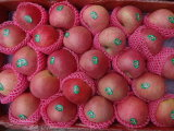 Regular Supplier Fresh Red Qinguan Apple