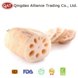 Top Quality Fresh Whole Lotus Root