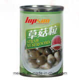Top Quality Canned Whole Straw Mushrooms