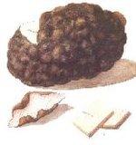 Poria Mushroom Extract