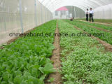100% Virgin HDPE Anti-Insect Shade Net for Agriculture Greenhouse