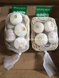 Solo Garlic China 3.0cm 3.5cm