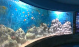 Acrylic Aquarium Background Mr287