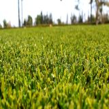 Competed Price of Fake Grass, Artificial Grass for Landscaping