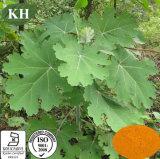 Natural Feed Additive Macleaya Cordata Extract Sanguinarine