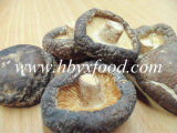 Famous and Good Food Dried Smooth Shiitake Mushroom From China