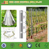 150g Hot Dipped Galvanized Pole for Vineyard, Grape Stake