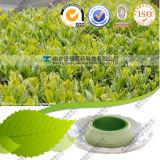 Ceremonial Grade Supplier Bulk Price Green Matcha Tea