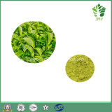 High Quality Green Tea Extracted 98% Green Tea Polyphenol