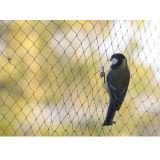 3/4′′ Open Mesh PP or PE Knotless Anti Bird Netting