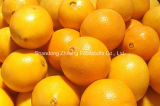 Chinese Fresh Navel Orange in High Quality