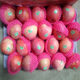 New Harvest of Chinese Fresh Red Qinguan Apple