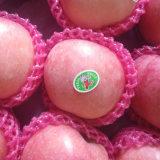 Golden Supplier of Fresh Blush Red FUJI Apple