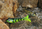 Soft Body with Lead Lure 5558 Soft Lure Fishing Lure