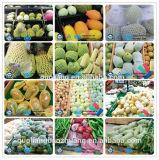 Wholesale Papaya Foam Protective Fruit Net