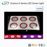 Full Spectrum Uranus 6 LED Grow Light for Medical Plants