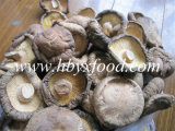 Great Organic Food and Dileciouse Dried Smooth Shiitake Mushroom