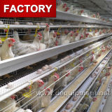 a Type Chicken Layer Cage with Automatic Drinker System
