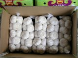 5.0cm Chinese Pure White Garlic of Small Package in Carton