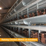 China high quality automatic poultry layer cages systems