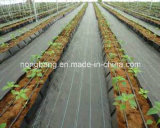 5m*100m/Roll, PP Woven Weed Material