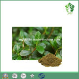 Hot Selling Natural Anti-Oxidant Bilberry Leaf Extract, Flavones 5%, 10%