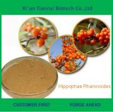 100% Natural Hippophae Rhamnoides Extract Powder
