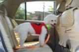 Pet Dog Cat Car Safety 2.5cm Width Seatbelt Pet Accessories