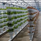 Direct Selling High Quality Hydroponics System