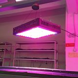 Black Housing Hydroponics System Verticalled Growing Lamp