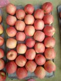 Fresh Pink Lady Apple Fruit