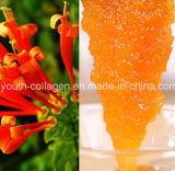 Honey Top 100%Natural Organic Chinese Herbal Medicine Honey, Wild/Soil Honey, Ripe Honey, No Antibiotics, No Pesticides, No Pathogenic Bacteria, Health Food