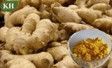 Ginger Extract, Gingerols 5% to 20% Test by HPLC