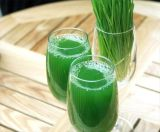 High Quality Organic Barley Grass Powder