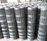 Hot Dipped Galvanized Knotted Wire Mesh Fence for Grassland