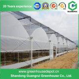 Factory Price Po Film Multi-Span Greenhouse Various Plastic Film