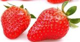 Pure Natural Dried Fruit Flavour Strawberry Powder Water Soluble