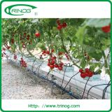 Tomato Hydroponic growing system for sale