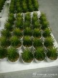Best Selling Artificial Plants and Flowers of Succelents Gu0112213904
