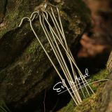 Dia5.0 Titanium Alloy Bend Hook Tent Peg for Outdoor Camping