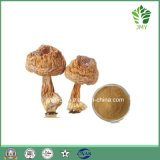 Pure Natural Agaricus Blazei Extract/Polysaccharides 20%-50%, 10: 1