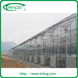 Agricultural Multispan Glass Greenhouse for lettuce growing