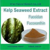 Eco-Friendly 15% Alginic Acid Seaweed Extract Powder