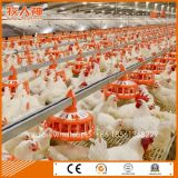 Automatic Poultry Equipment for Breeder Farm with Prefab House Construction