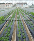 PP Woven Weed Control Landscaping Fabric