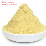 Spices Powder [Dried Ginger Extract Powder] Herbes and Spice