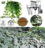 Natural IVY Extract Hederacosid C 5%-10%; Hederacosids 5%-10%