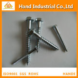 Stainless Steel 304/316 M12 DIN571 Coach Screw