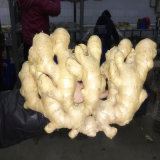 250 G up Air Dried Ginger for Canada Market