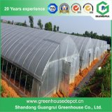 High Quality Single Span Plastic Film Solar Greenhouse for Sale